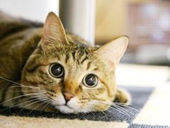動物アレルギーがあってもペットと暮らしたいのイメージ